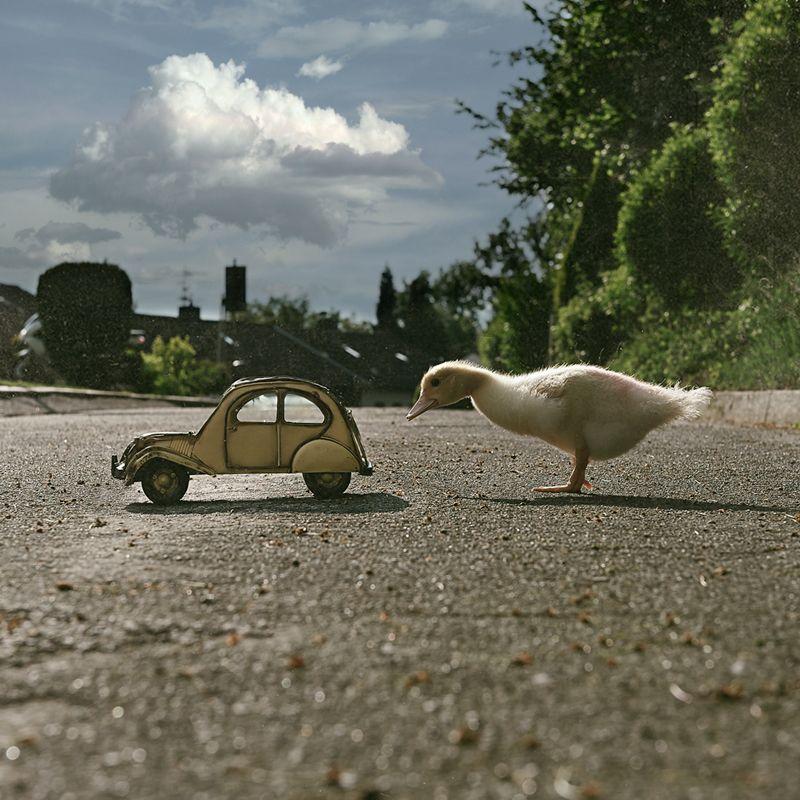 Entengrütze - Philosophie mit Enten